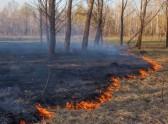 2520098-wypalanie-trawy-657-323