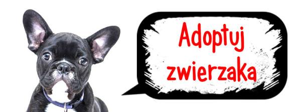 adoptuj-_zwierzakaa-600x225