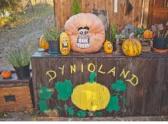 dynioland